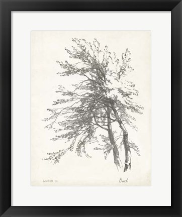 Framed Beech Tree Study Print