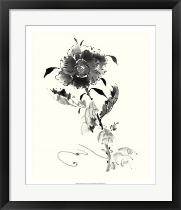 Framed Studies in Ink - Rose I Print