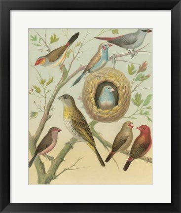 Framed Birdwatcher's Delight I Print