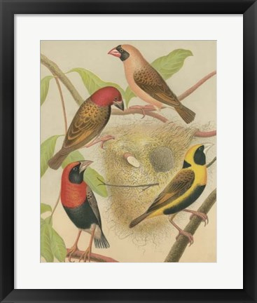 Framed Birdwatcher's Delight II Print