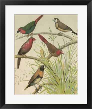 Framed Birdwatcher's Delight III Print