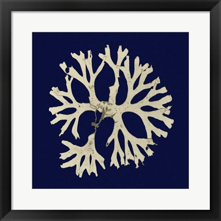 Framed Seaweed on Navy I Print
