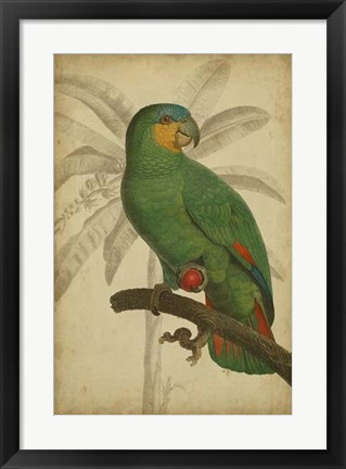 Framed Parrot and Palm I Print