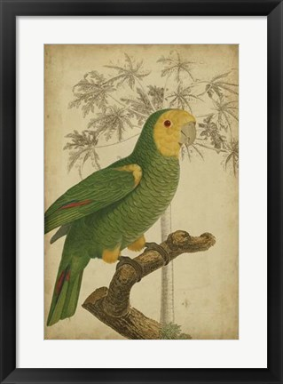 Framed Parrot and Palm IV Print