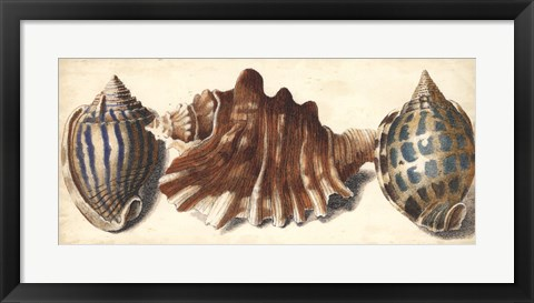 Framed Shell Trio II Print