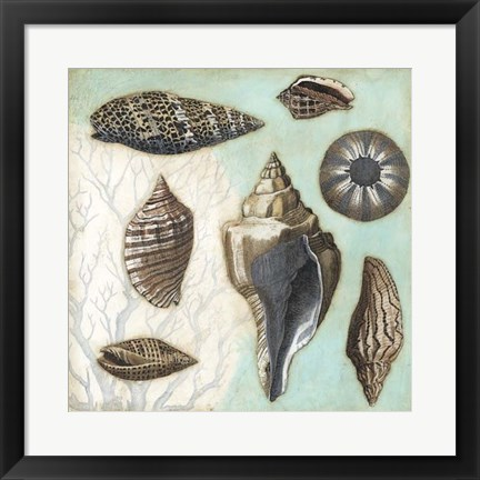 Framed Antique Shell Collage II Print