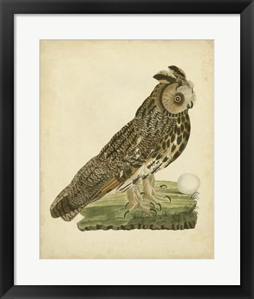 Framed Antique Nozeman Owl III Print