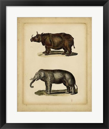 Framed Studies in Natural History III Print