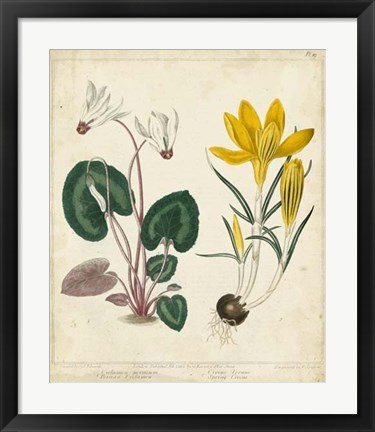 Framed Garden Display IV Print