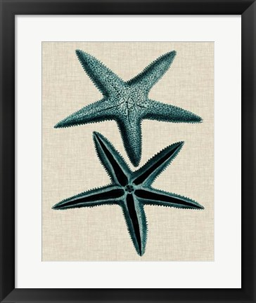 Framed Coastal Starfish III Print