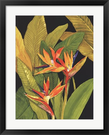 Framed Dramatic Bird of Paradise Print