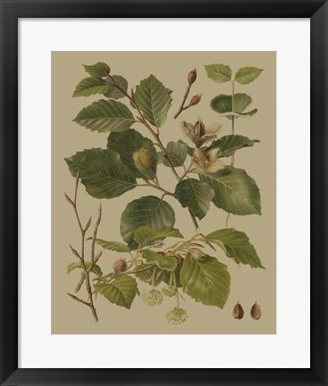 Framed Forest Foliage III Print
