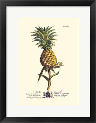Framed Royal Botanical II Print