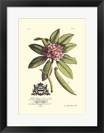 Framed Royal Botanical V Print