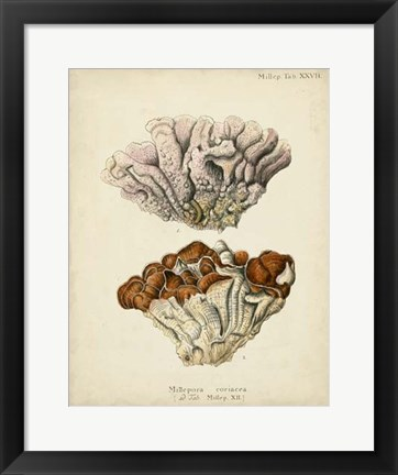 Framed Coral Collection II Print
