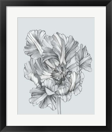 Framed Silvery Blue Tulips I Print