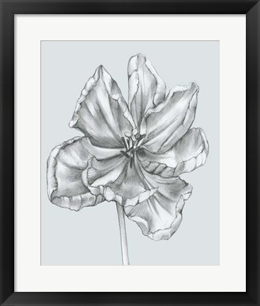 Framed Silvery Blue Tulips IV Print
