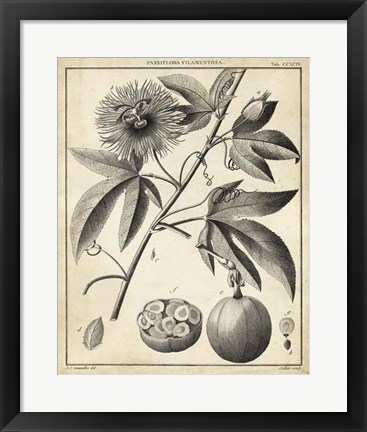 Framed Passiflora I Print
