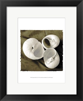 Framed Equalized Shell Trio II Print