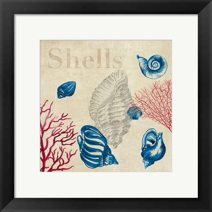 Framed Shell Study Print
