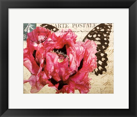 Framed Carte Postale Poppy Print