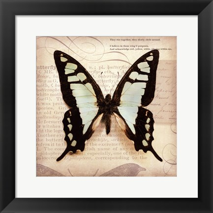 Framed Butterflies Script I - mini Print