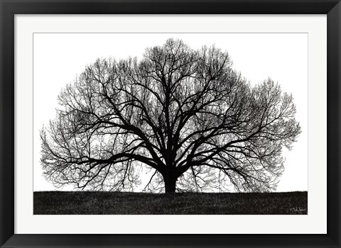 Framed Tree Print