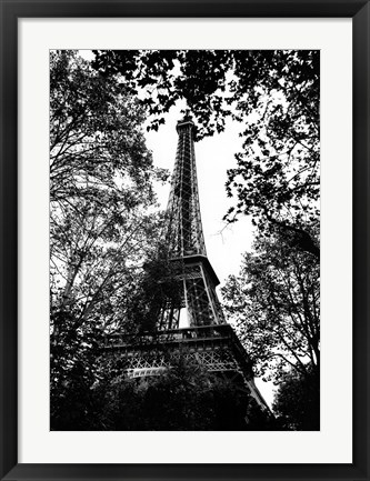 Framed Paris Trees Print