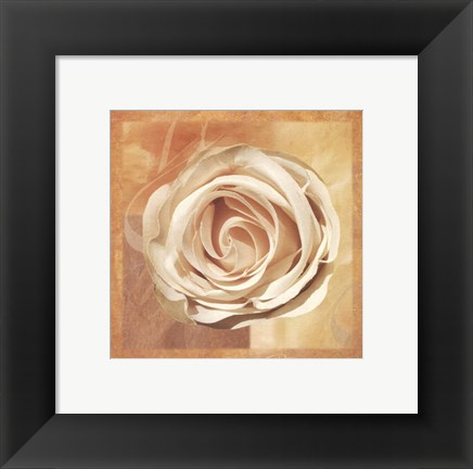 Framed Warm Rose II Print