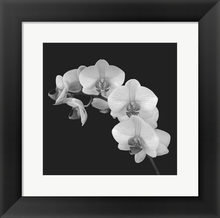 Framed Orchid Illusion II Print