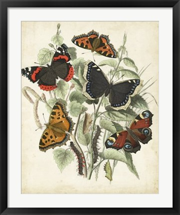 Framed Non-Embellished Butterfly Haven I Print
