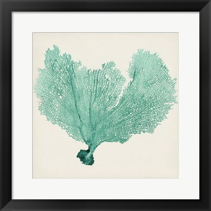 Framed Sea Fan VI Print