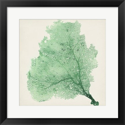 Framed Sea Fan VII Print