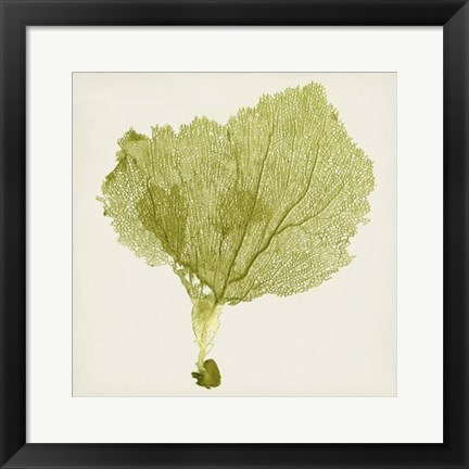 Framed Sea Fan VIII Print