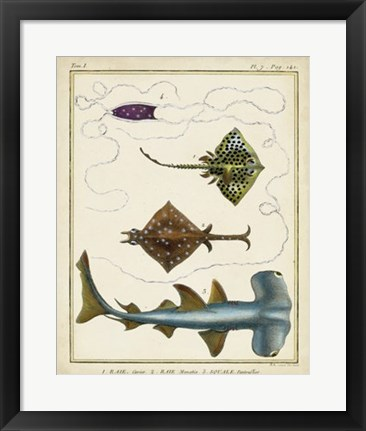 Framed Antique Rays & Fish I Print