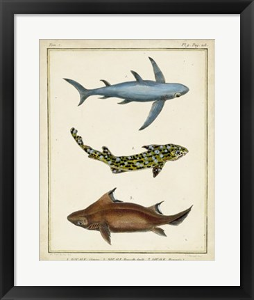 Framed Antique Rays & Fish III Print