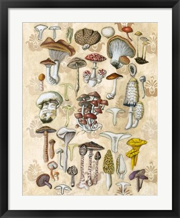 Framed Mycological Study Print