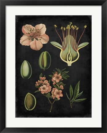 Framed Study in Botany I Print