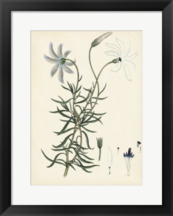 Framed Splendors of Botany II Print