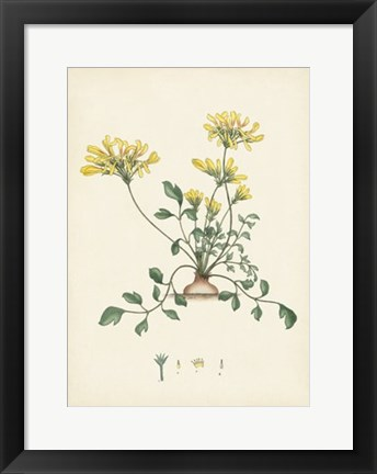 Framed Splendors of Botany VIII Print