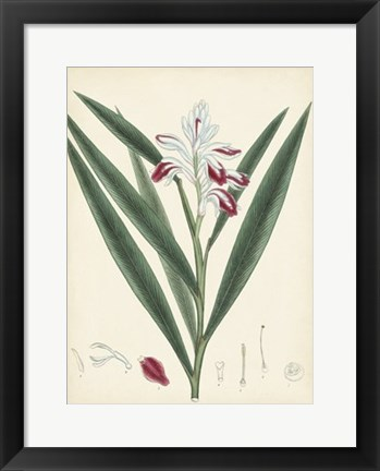 Framed Splendors of Botany XI Print
