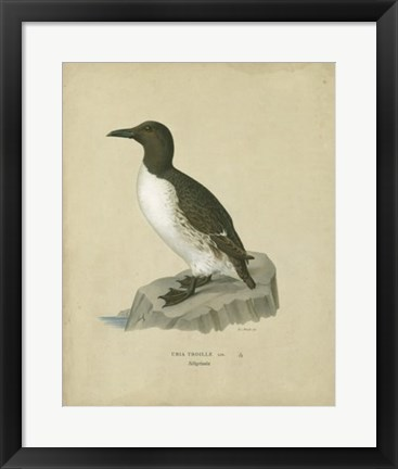 Framed Antique Penguin II Print