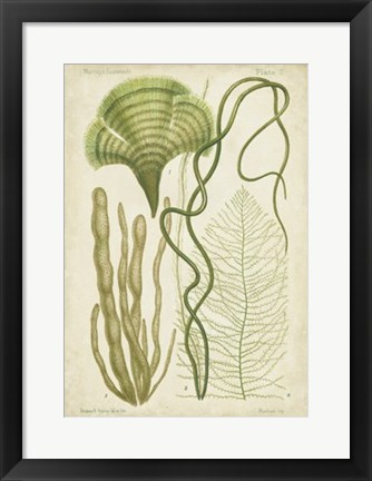 Framed Seaweed Specimen in Green II Print