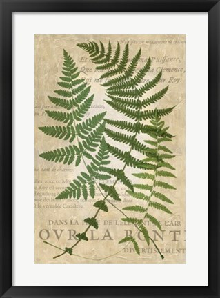 Framed Fern Folio I Print