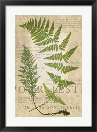Framed Fern Folio IV Print