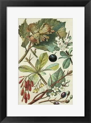 Framed Fruits & Foliage V Print