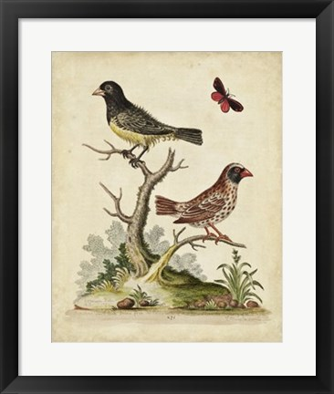 Framed Edwards Bird Pairs I Print