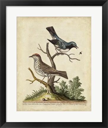 Framed Edwards Bird Pairs V Print