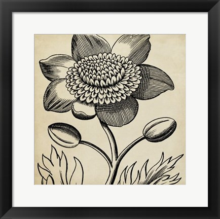 Framed Graphic Floral III Print