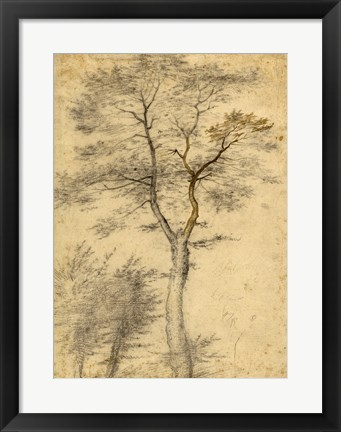 Framed Three Studies of Trees Print